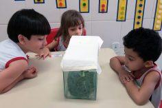 Interdisciplinaridade gera mais conhecimento no Maternal 3